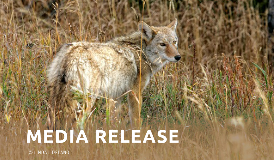 Mendocino County to Perform Environmental Study on Lethal Animal Program: County Settles Second Lawsuit with Animal Protection Coalition Over Controversial Wildlife Services Program