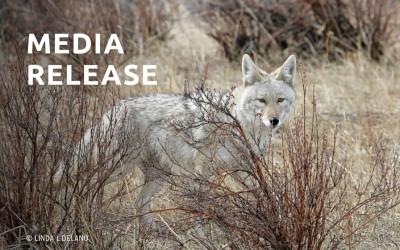 Pop-star Jessica Simpson Loses Companion Dog to Coyote