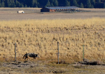 USDA's Wildlife Services killed 4 million animals in 2013; seen as an overstep by some