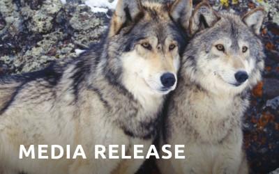 Nature Saskatchewan Passes Resolution Condemning Coyote Bounties