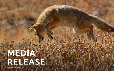 Flawed Fee Analysis Diverts Fur-trapping Costs to California Taxpayers