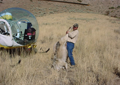 Lawsuit Challenges Government's  Large-scale Wildlife Killing in Idaho