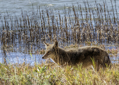 Groups Sue NorCal County Over Work With Federal Wildlife Agency