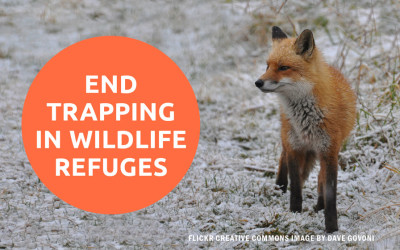 ACTION ALERT: Urge Congress to End Cruel Trapping on National Wildlife Refuges