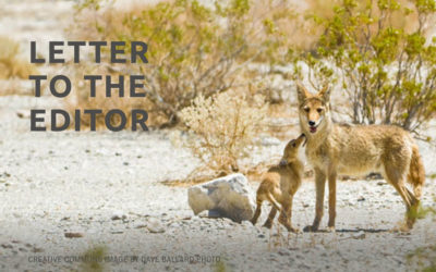 Coyote control efforts have the 'opposite effect'