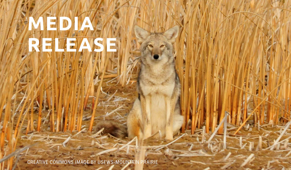 The Fund for Wild Nature Names Project Coyote Founder & Executive Director Camilla Fox Grassroots Activist of the Year