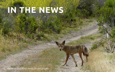Study: Time To Reform Rogue Wildlife Agency