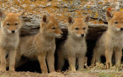 Unfair Game: Ending Wildlife Killing Contests