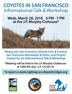 Coyotes in San Francisco @ JP Murphy Clubhouse   San Francisco   California   United States