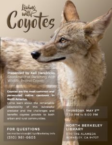 Living with Coyotes @ North Berkeley Library   Berkeley   California   United States